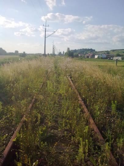 Porośnięte torowisko w Woźnikach, szlak od kilku tygodni nie używany, natura robi swoje...